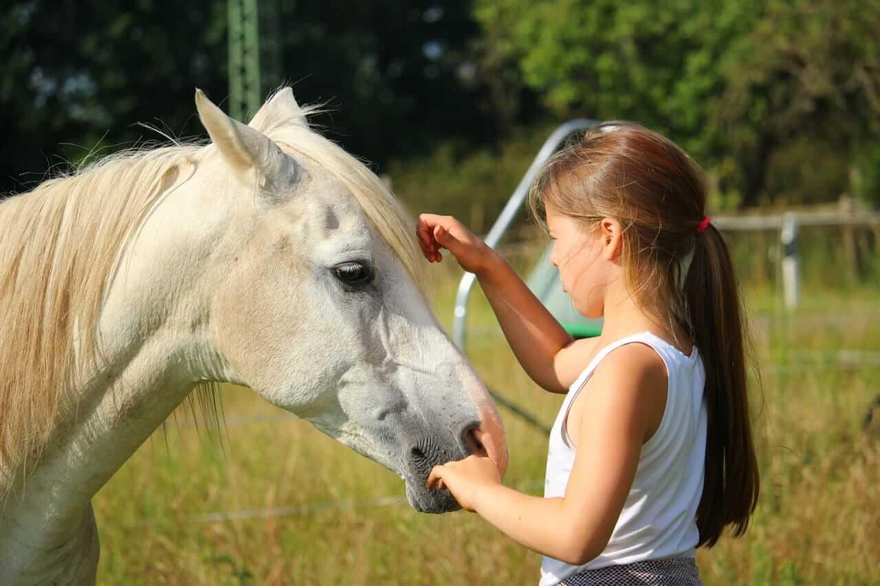 Tips en weetjes deze hilarische foto van een meisje en for Paard aan huis te koop