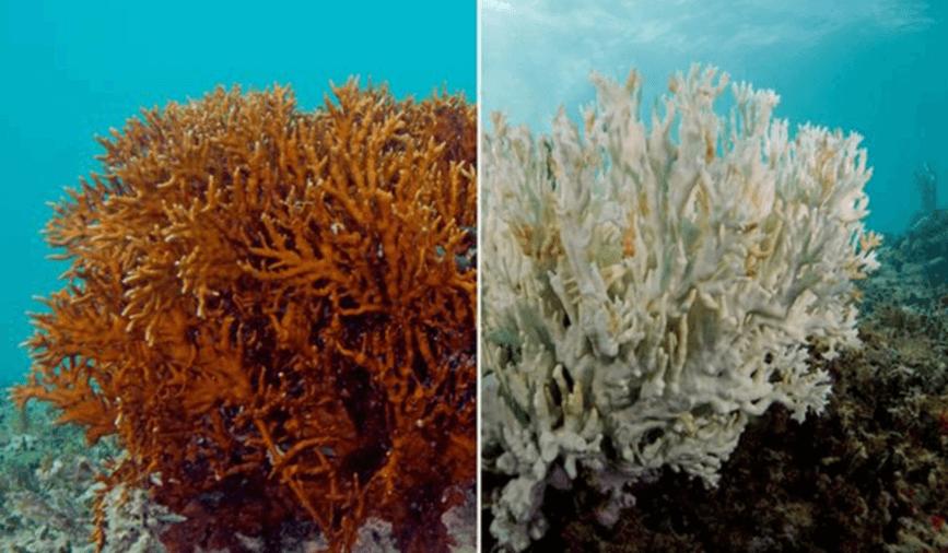 koraalrif