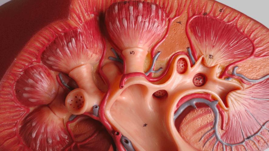 Nierbekkenontsteking symptomen en behandeling  Medischebron