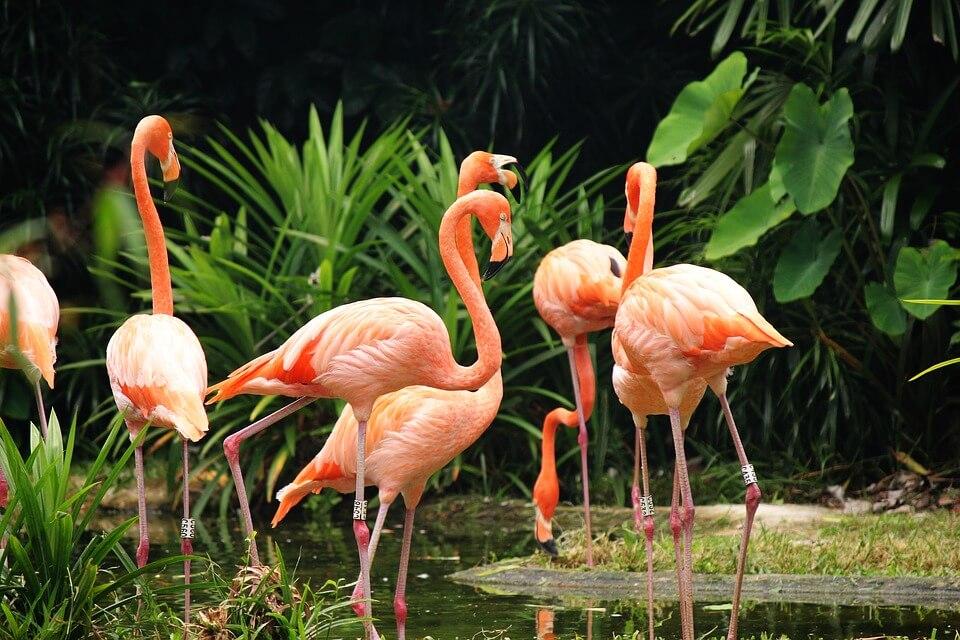 flamingo's baan Bahama's