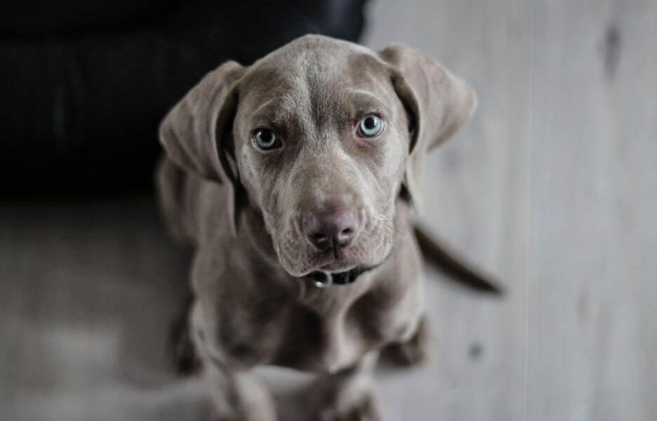 hondenbezitters