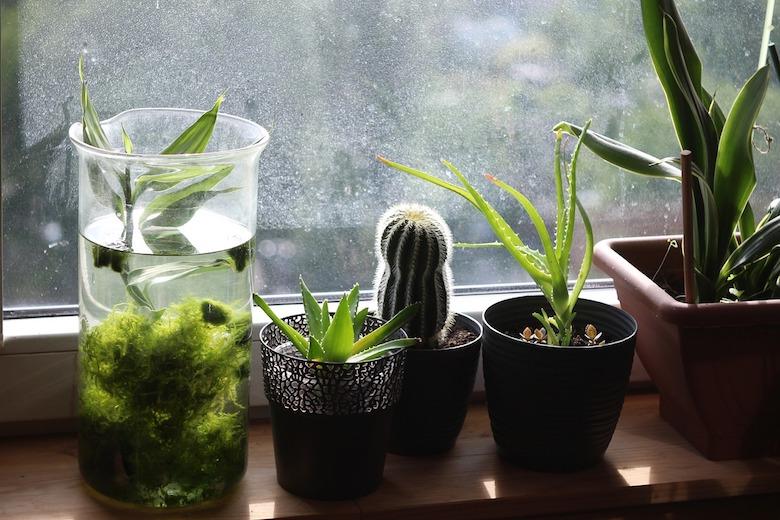 Dit is waarom je een paar planten in je slaapkamer moet zetten