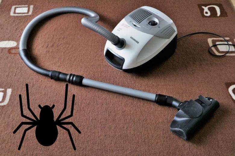 Uberleben Spinnen Im Staubsaugerbeutel Wenn Du Sie Aufsaugst